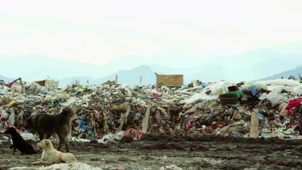 Man walks in Garbage