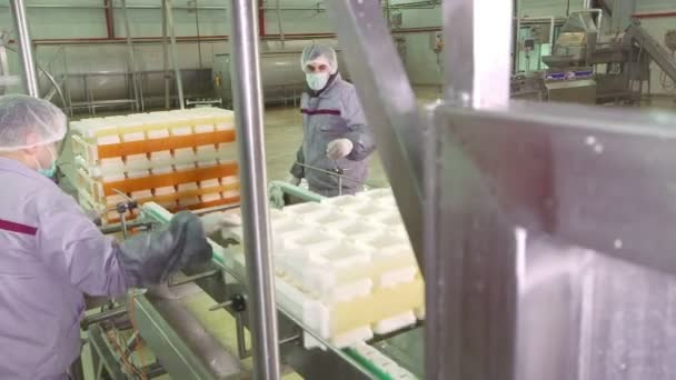provoz na výrobu sýra