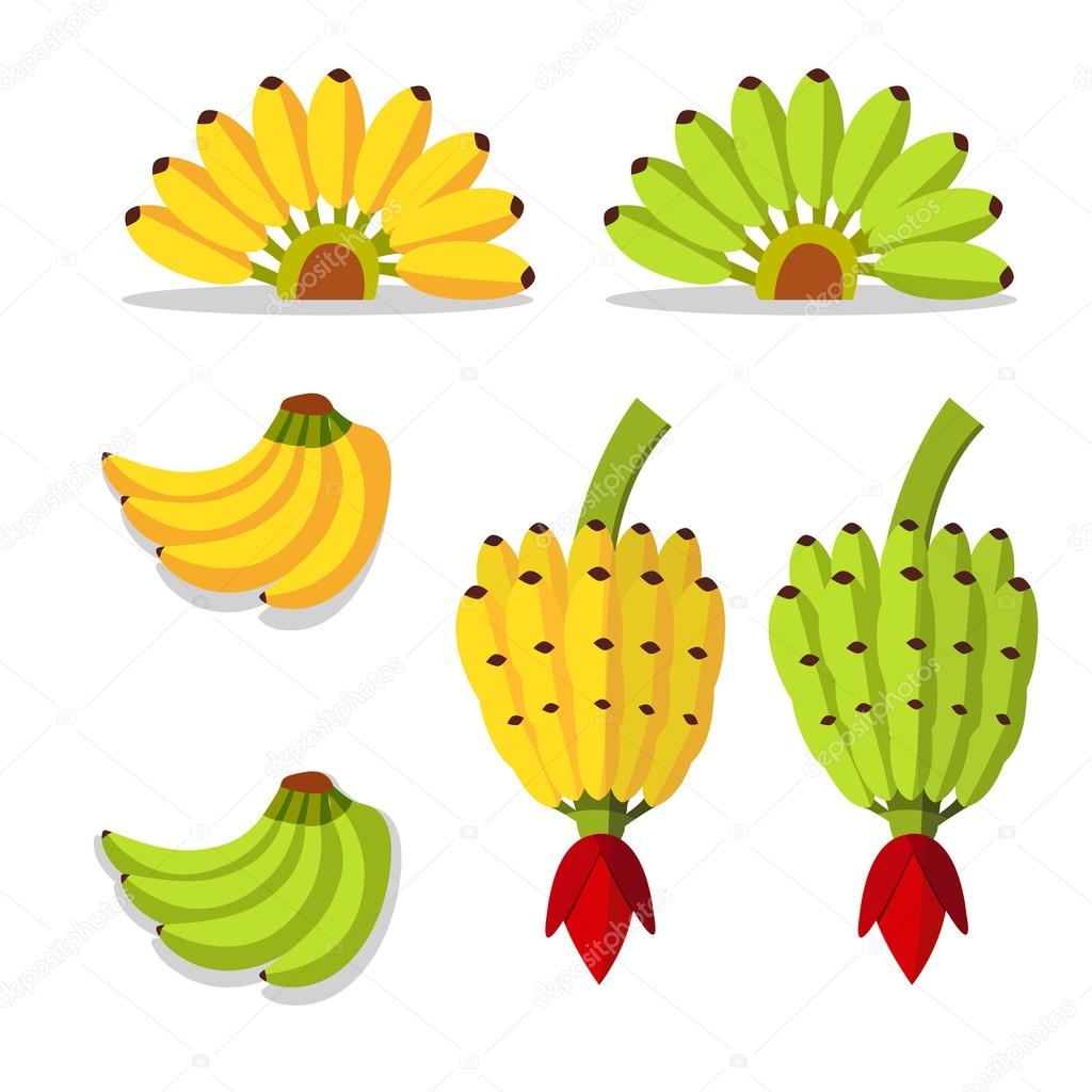 bunch of bananas with yellow and green