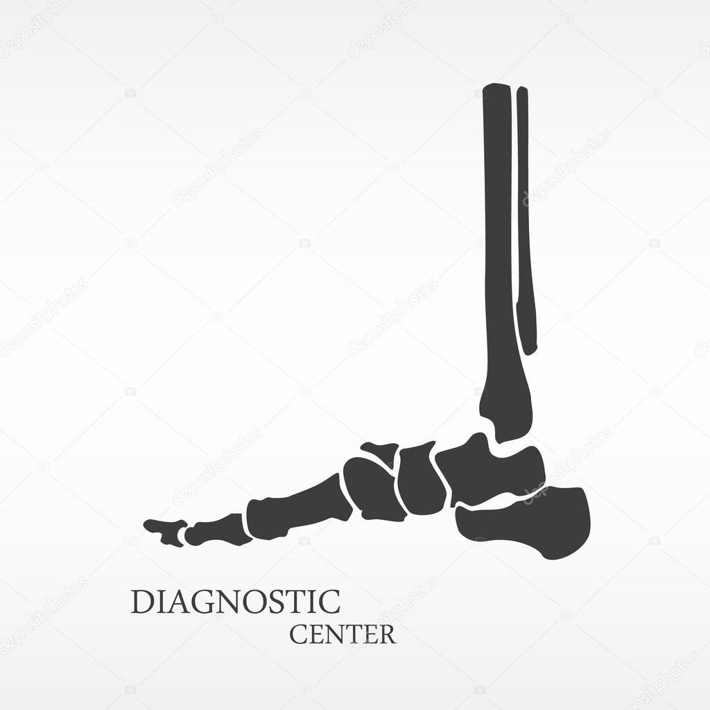 Anatomía ósea del pie — Fotos de Stock © viktorijareut #121583816