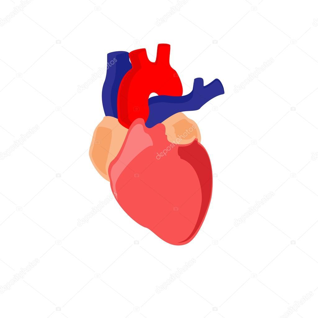 Anatomía del corazón humano — Foto de stock © viktorijareut #122607792