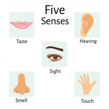 Five senses raster