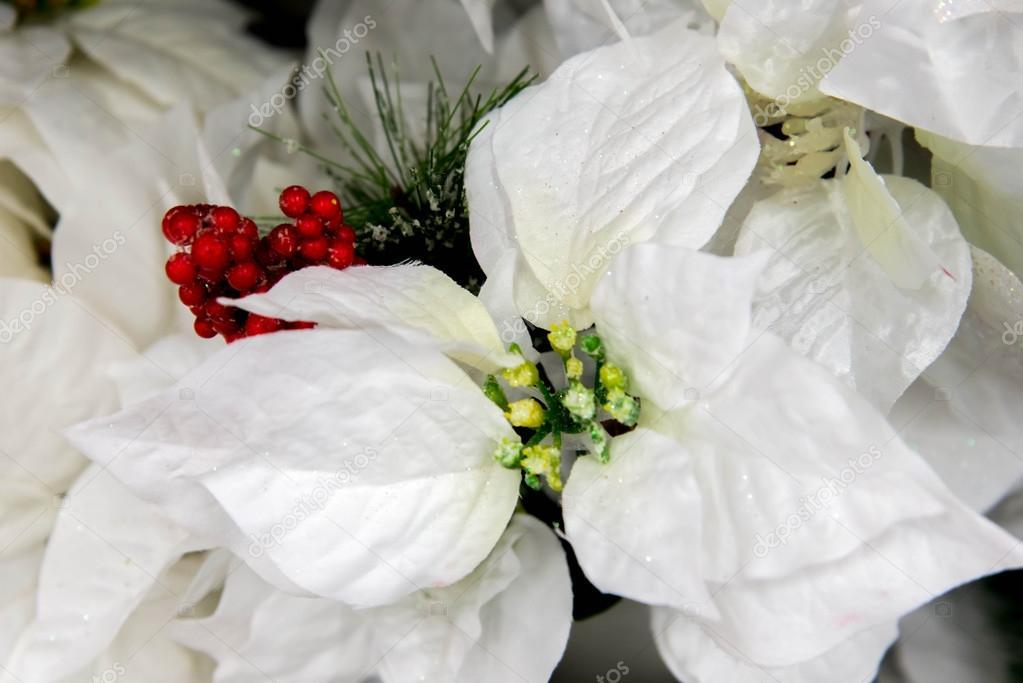Christmas decorations - white Poinsettia– stock image
