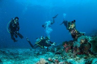 Dalgıçlar yüzme ve Gili, Lombok, Nusa Tenggara Barat, Endonezya sualtı fotoğraf çekimi resmi vardır.