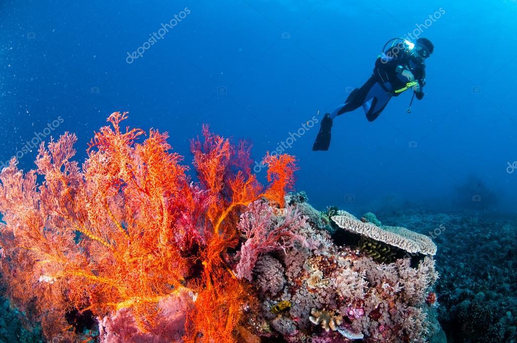 Diver swimming, sea fan Anella mollis in Gili, Lombok, Nusa Tenggara Barat, Indonesia underwater photo