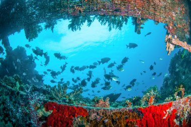 Wreck and fishes swim in Gili, Lombok, Nusa Tenggara Barat, Indonesia underwater photo