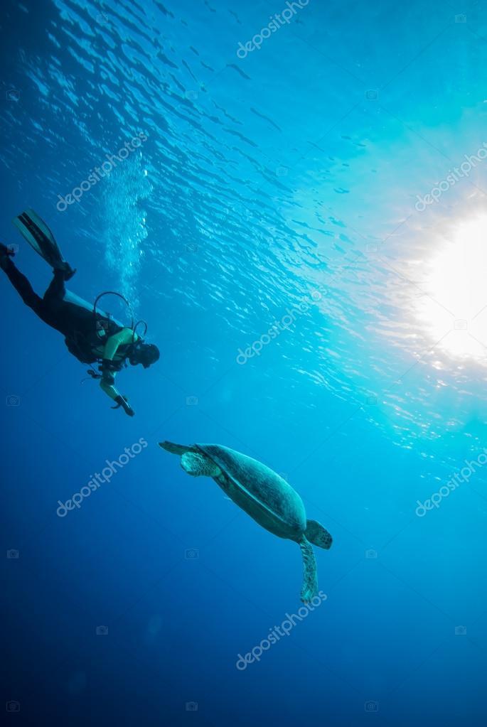 Diver and green sea turtle in Derawan, Kalimantan, Indonesia underwater photo