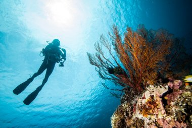 Diver and sea fan in Derawan, Kalimantan, Indonesia underwater photo