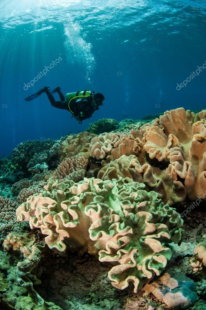 Divers and mushroom leather corals in Banda, Indonesia underwater photo