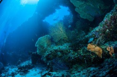 Diver, sea fan Melithaea, sponge in Banda, Indonesia underwater photo