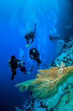 Divers and sea fan in Banda, Indonesia underwater photo