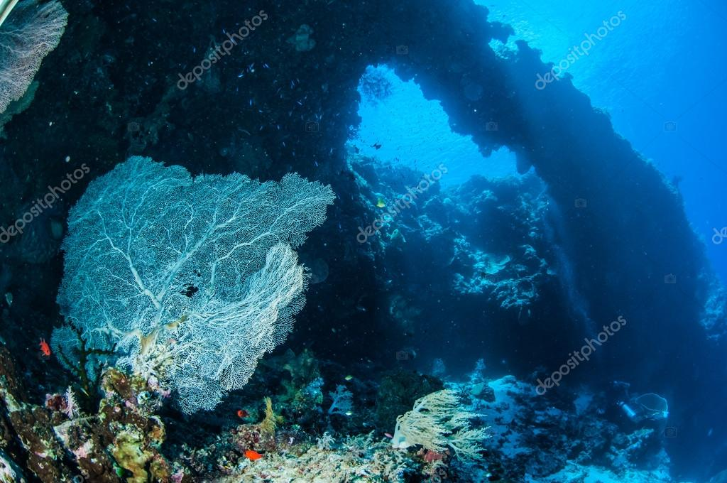 Sea fan Annella mollis in Banda, Indonesia underwater photo