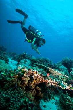 Scuba diving diver kapoposang sulawesi indonesia underwater