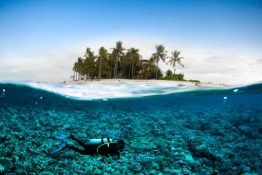 Scuba diving diver below coconut island kapoposang sulawesi indonesia underwater bali lombok