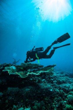 Scuba diving diver kapoposang sulawesi indonesia underwater