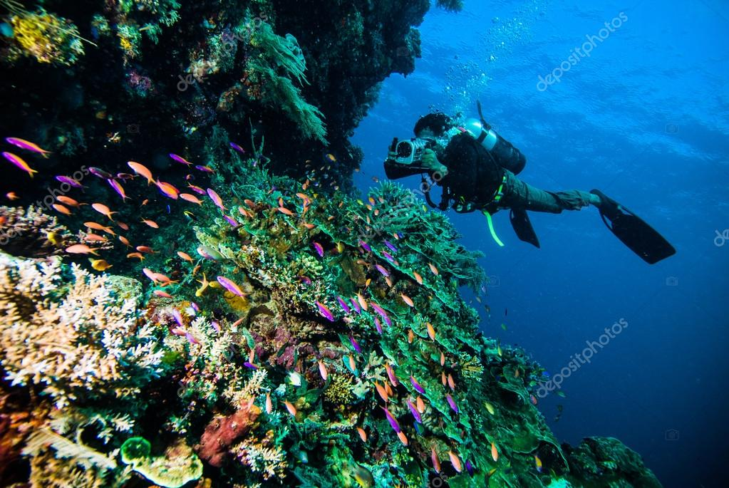 Diver take a photo video upon coral kapoposang indonesia scuba diving
