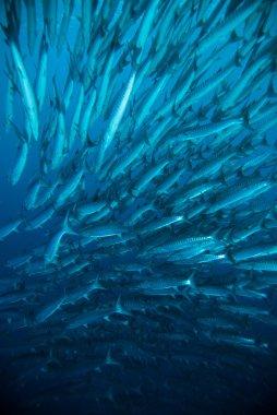 diver take a photo video upon coral bali indonesia scuba diving