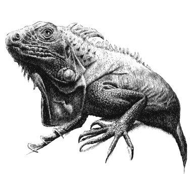 illustration with a large iguana
