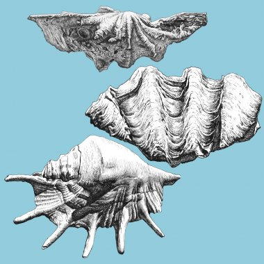 illustration with different realistic shells
