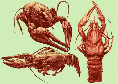 illustration with cancers of various shapes