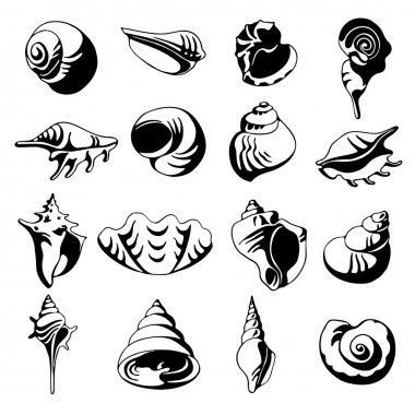 Iillustration with seashells.
