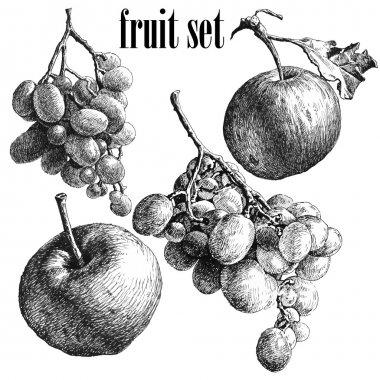 illustration with grapes and apples