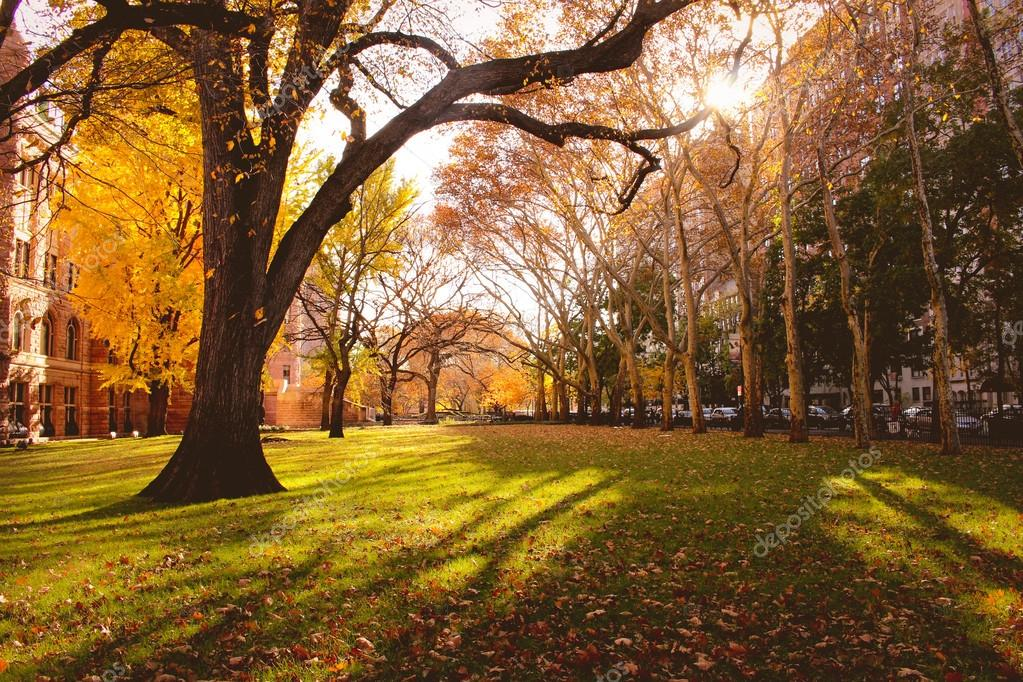 [Image: depositphotos_59237121-stock-photo-autum...w-york.jpg]