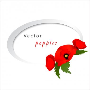Vector white background with poppies
