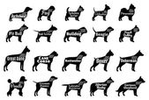 Vektorové kolekce psa siluety izolované na bílém. Psi plemena názvy
