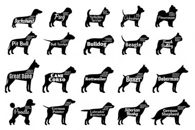 Vector dog silhouettes collection isolated on white. Dogs breeds names