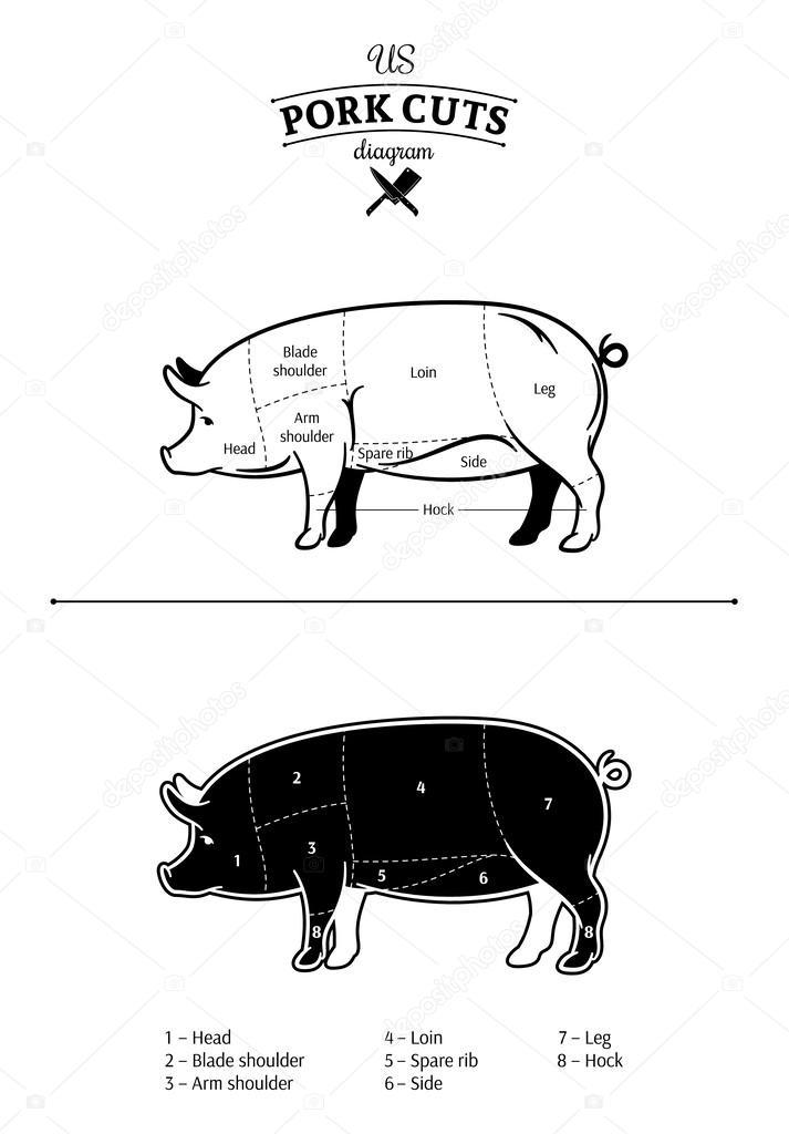 Cuts Of Pork Diagram | American Us Pork Cuts Diagram Stock Vector C Counterfeit 60075581