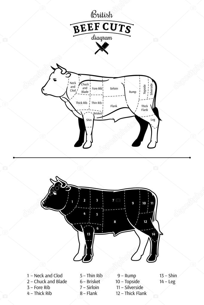British Beef Cuts Diagram Stock Vector Counterfeit 60146185