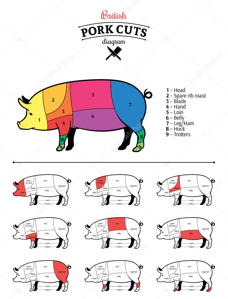 Diagrama de cortes de carne de cerdo británica — Archivo Imágenes ...