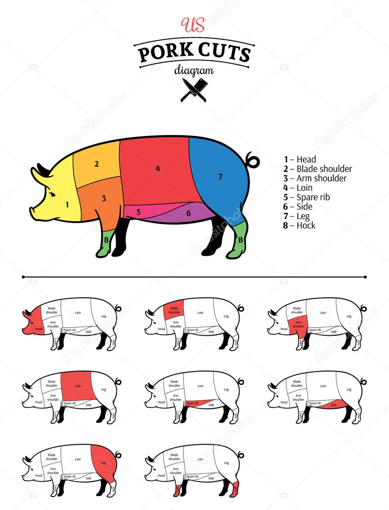 American (US) Pork Cuts Diagram — Stock Vector © Counterfeit #68778181
