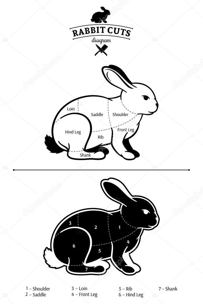 depositphotos_71256489 stock illustration rabbit cuts black and white rabbit cuts black and white diagram isolated on white stock vector