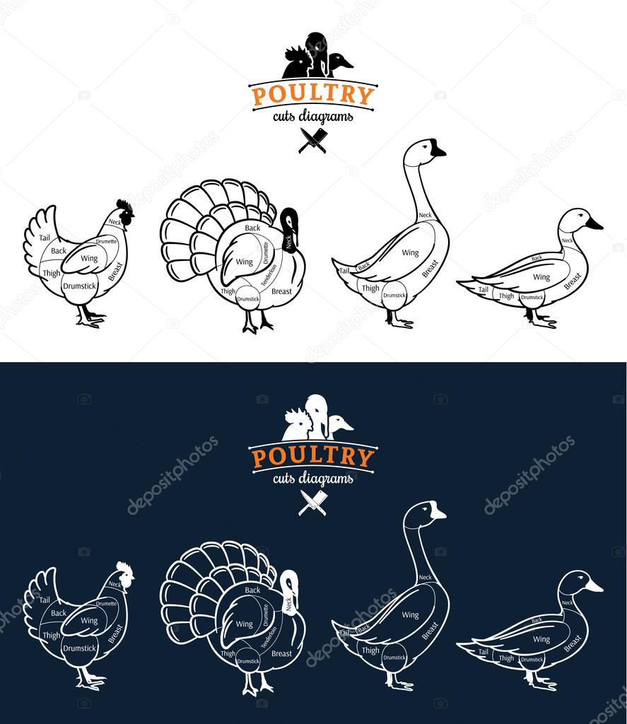 Poultry Cuts Diagrams Stock Vector Counterfeit 82131542 Chicken Diagram