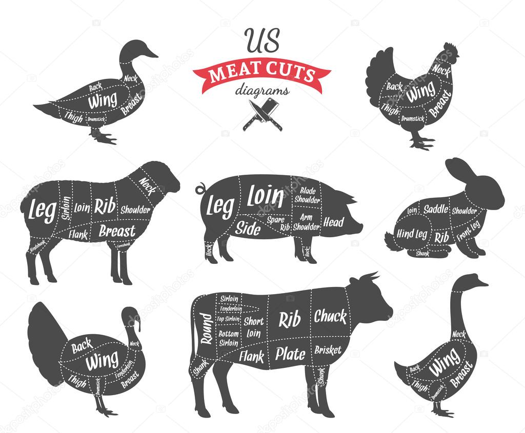 American (US) Meat Cuts Diagrams — Stock Vector © Counterfeit #87879146