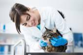 lékař zkoumá kočka