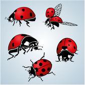 Photo Ladybug. vector