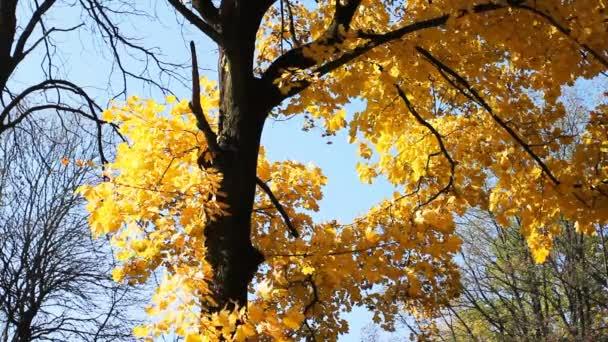 Herbstbaum gegen blauen Himmel