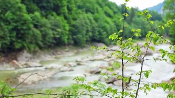 Větve a horské řeky v rozostření