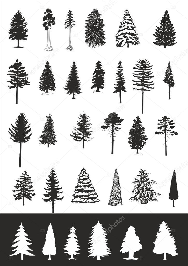 Pine trees, vector collection
