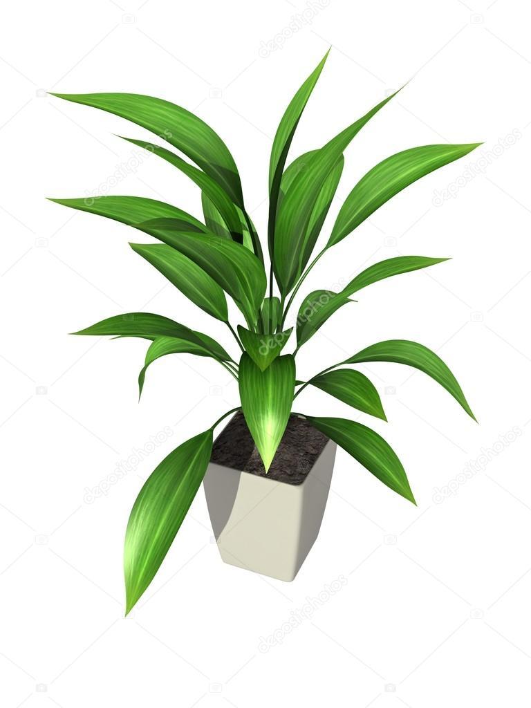 Planta maceta foto de stock elenven 78765058 - Plantar en maceta ...
