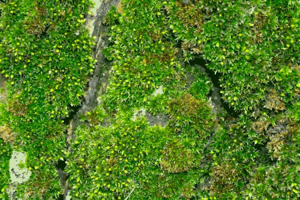 Illustration of the moss on tree