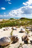 Fotografie Schalen von Korallen in Sian Kaan Biosphere Reserve Mexiko