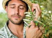 Farmer embraces his  olives plant with love