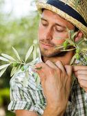 Farmář kontroluje stav dospělosti jeho oliv