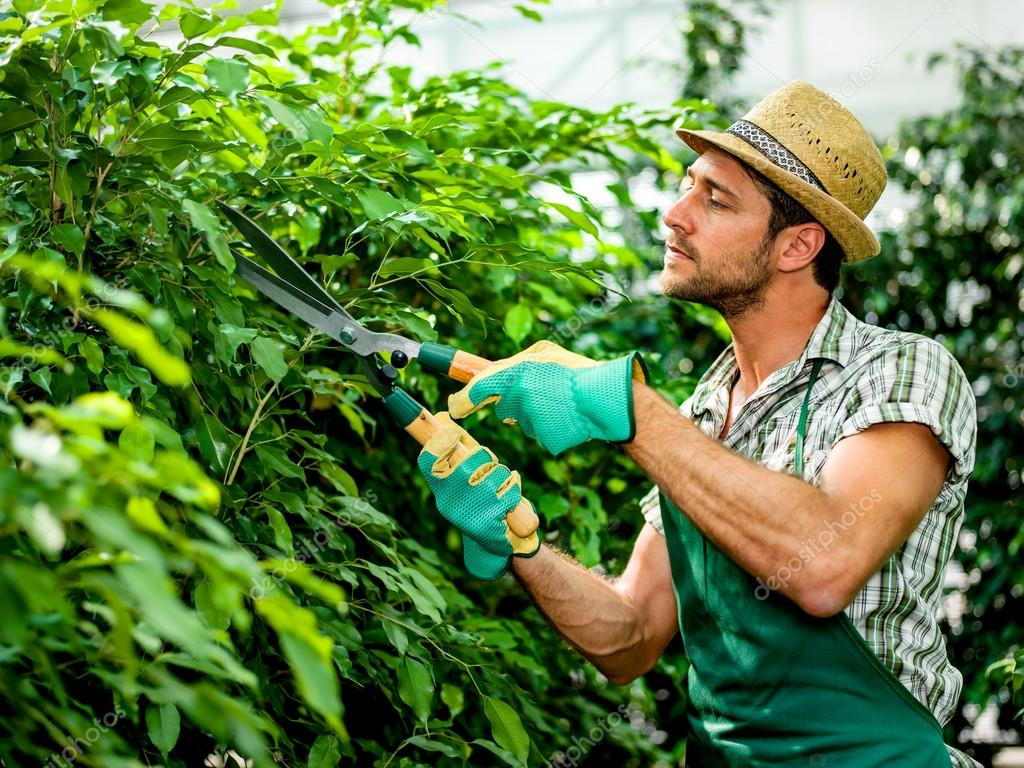 Farmer pruning plants in a greenhouse