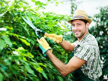 Happy farmer pruning plants in a greenhouse