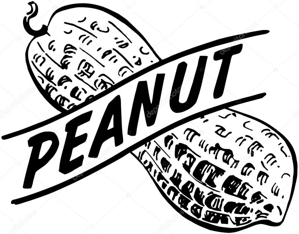 Peanut — Stock Vector #55667777